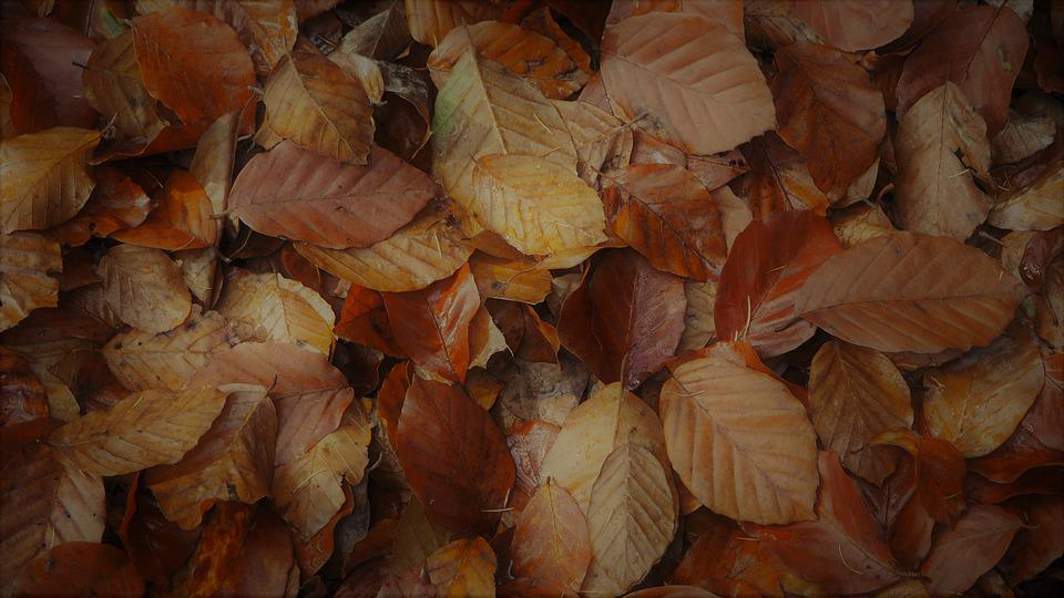 Autumn, Leaves, Nature, Forest, Fall Color, Colorful
