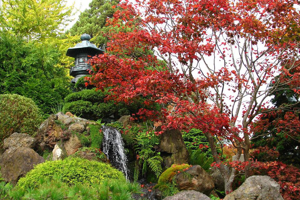 Japan, Japanese, Garden, Tree, Maple, Fall Color