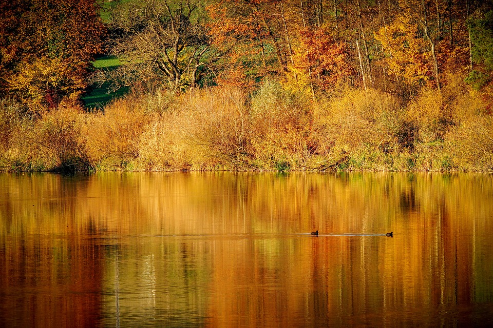 Landscape, River, Water, Autumn, Fall Color, Lighting