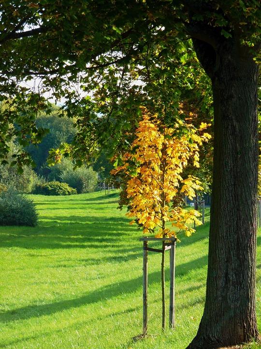Autumn, Autumn Leaf, Fall Color, Leaves, Autumn Colours