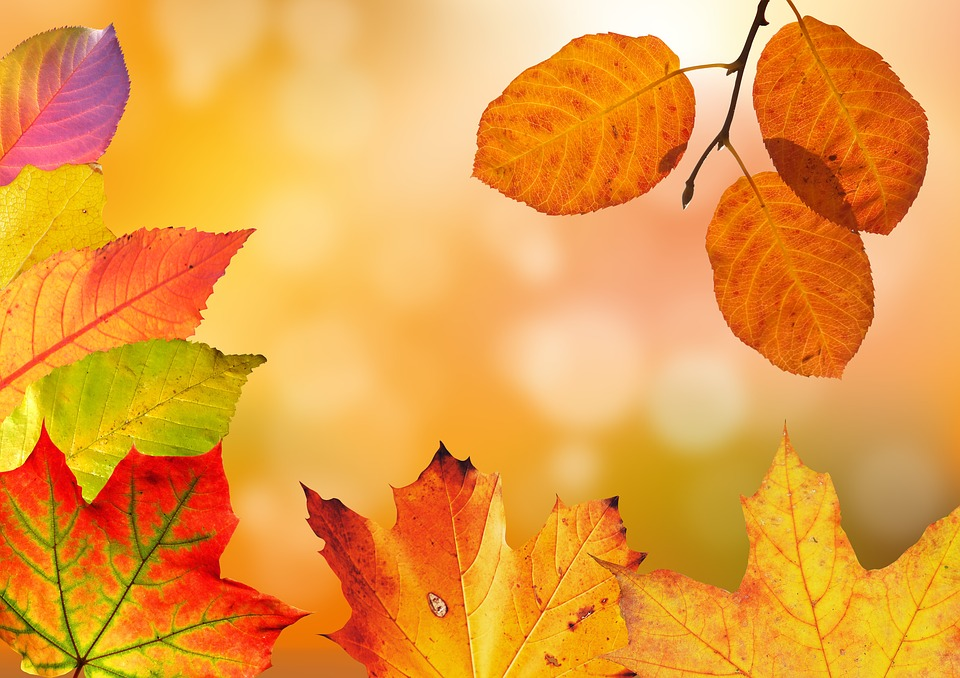 Autumn, Leaves, Colorful, Fall Foliage, Fall Color