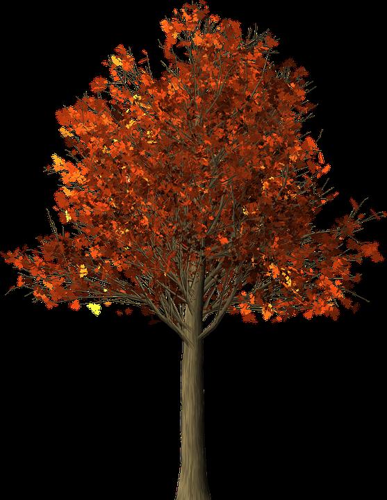 Tree, Maple, Maple Tree, Fall Leaves, Fall Colors