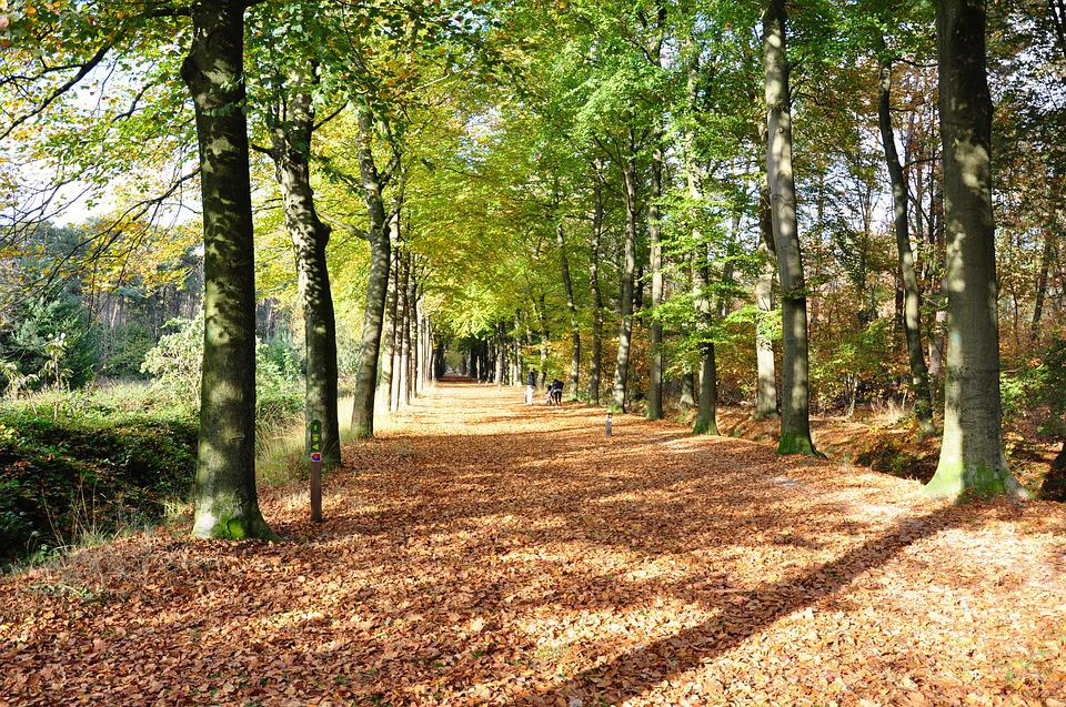 Nature, Autumn, Forest, Hiking, Trees, Fall Colors