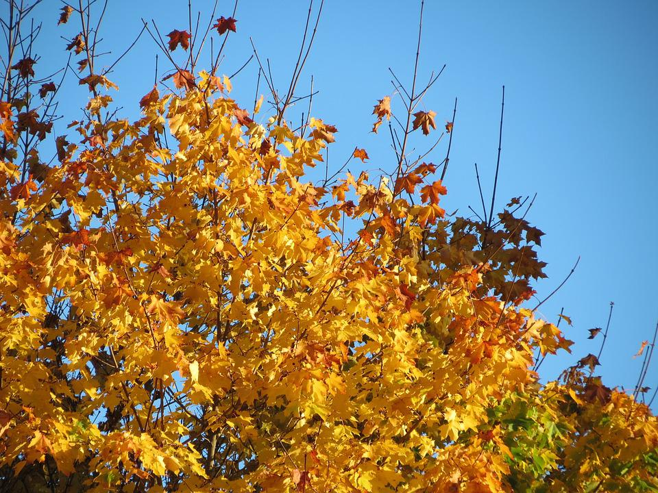 Sky, Blue, Autumn, Fall Colors, Orange, Red, Green