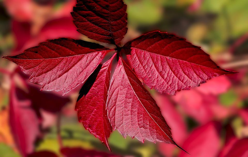Seasons Of The Year, Autumn, Fall Colors, Red