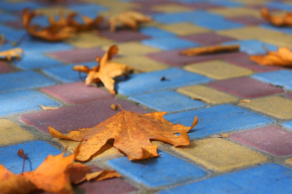 Autumn, Paint, Stroll, Fall Colors, Golden Autumn