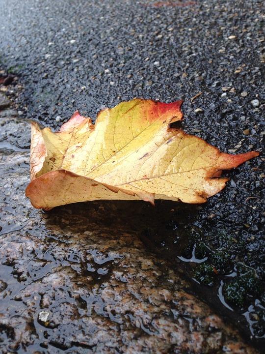 Leaf, Nature, Dead Leaf, City, Rain, Fall