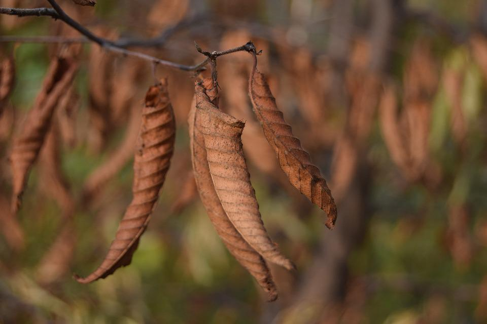 Leaf, Autumn, Brown, Fall, Dried Leaves, Autumn Woods
