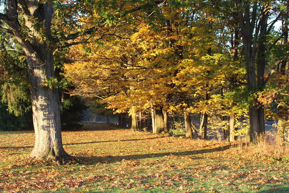 Fall Scene, Trees, Fall, Autumn, Fall Leaves