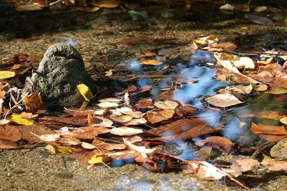 Fall Foliage, Water, Bach, Nature, Leaves, Autumn