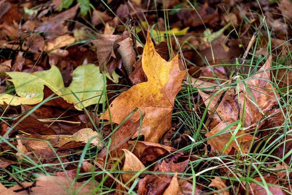 Fallen Leaves, Fall Foliage, Dead Leaves, Fall, Autumn
