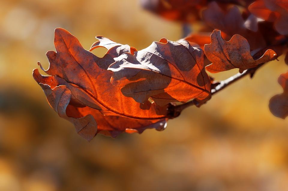Leaves, Autumn, Fall Foliage, Autumn Leaf, Brown