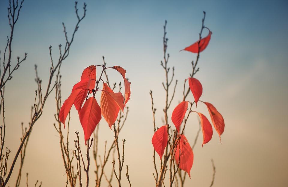 Autumn, Leaves, Fall Foliage, Fall Color, Nature, Red