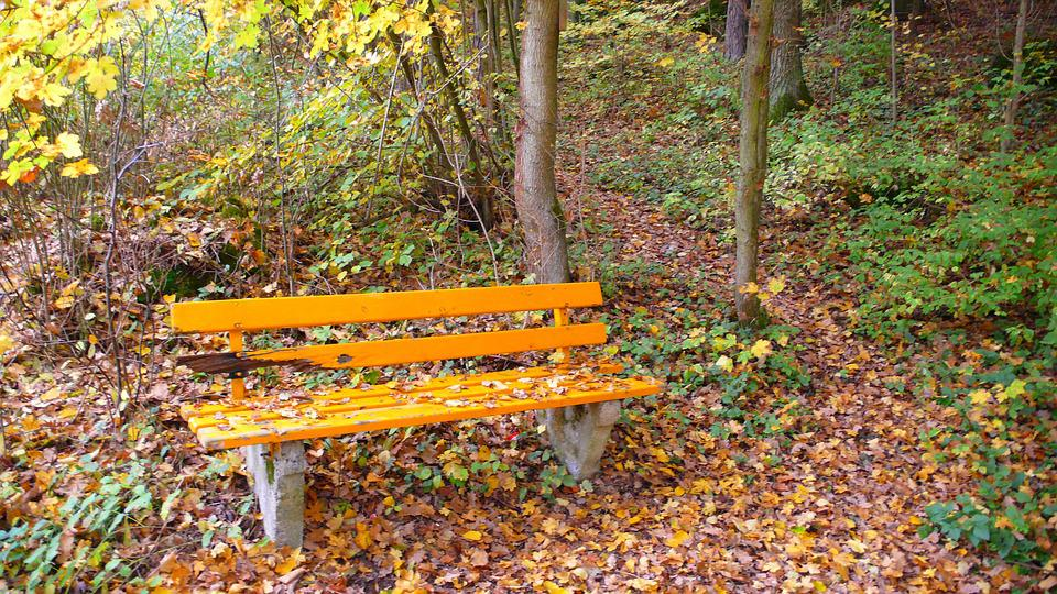 Forest, Bank, Autumn, Leaves, Fall Foliage, Park Bench
