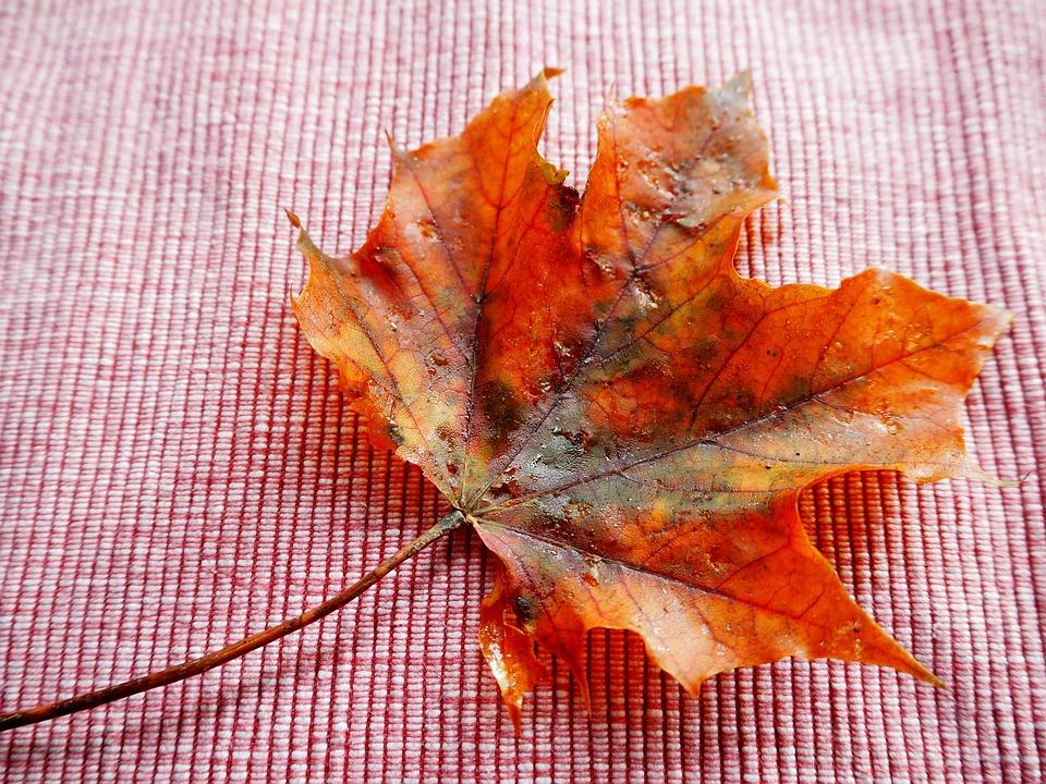 Leaf, Autumn, Leaves, Fall Foliage, Golden Autumn