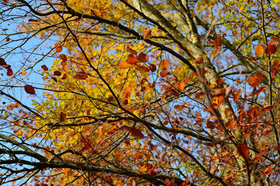 Autumn, Leaf, Golden Autumn, Fall Foliage, Nature