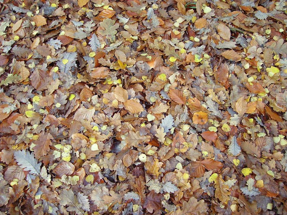 Free photo Fall Foliage Sheet Rain Fall Color Leaves - Max Pixel
