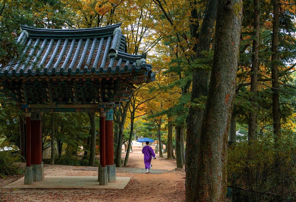 Korean Folk Village, Forest, Trees, Stroll, Fall