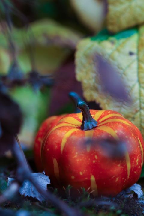Pumkin, Halloween, Leaf, Season, Autumn, Fall