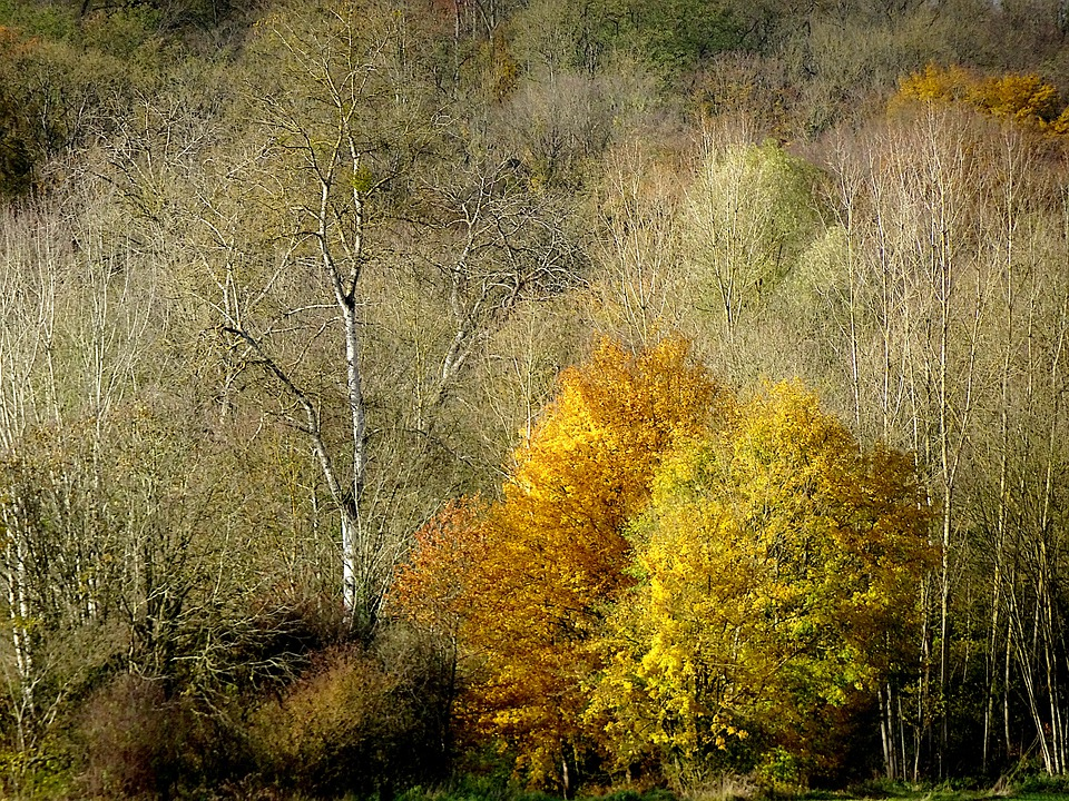 Autumn Landscape, Fall, Wood, Hill, Fall Colors