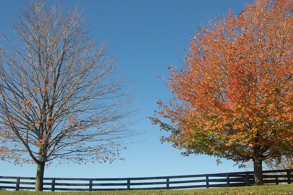 Trees, Sky, Fall, Autumn, Landscape, Scenic, Rural