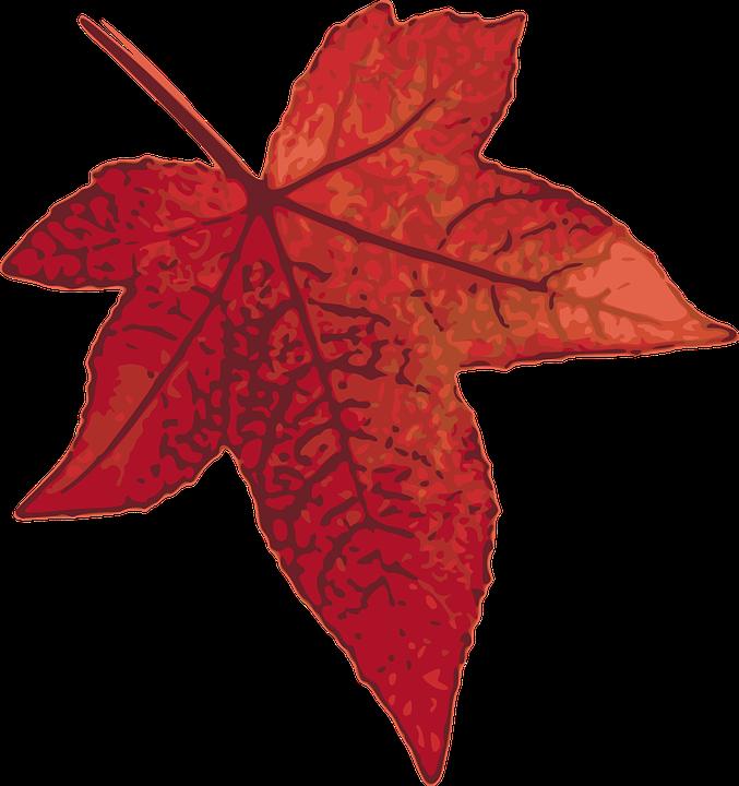 Maple, Leaf, Autumn, Fall, Foliage, Forest, Garden