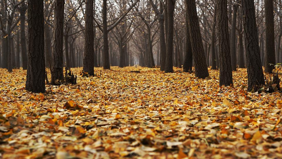 Autumn, Dry Leaves, Fall, Forest, Landscape, Leaves