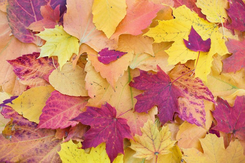 Autumn Leaves, Colorful Leaves, Fall Leaves, October