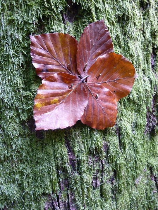 Autumn, Fall Color, Fall Leaves, Autumn Colours, Leaves