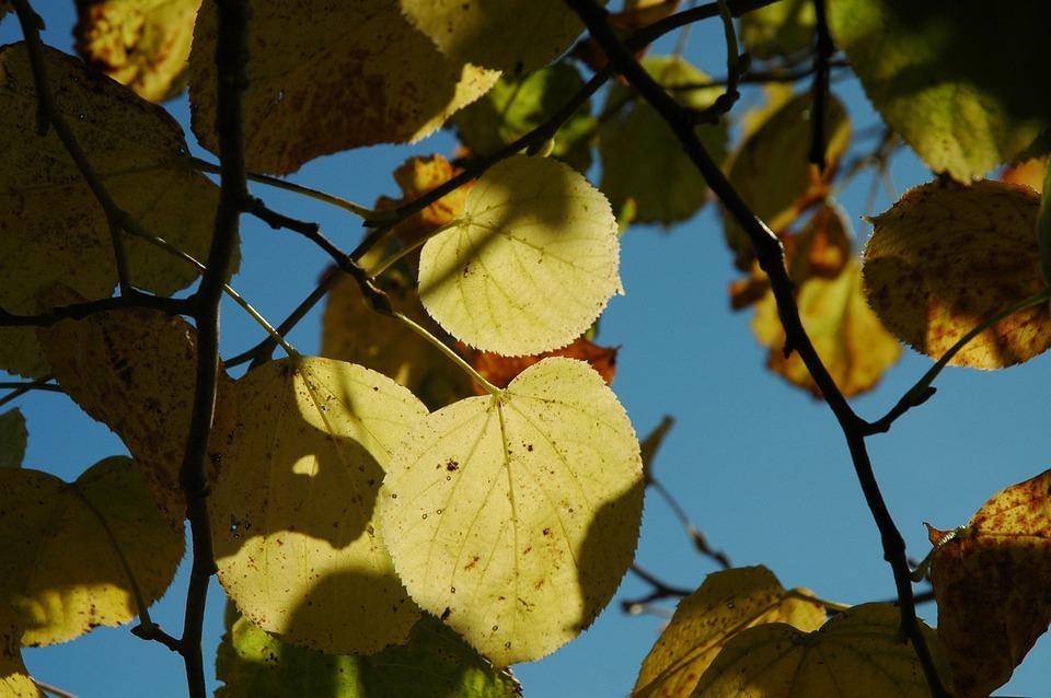 Fall Foliage, Sunbeam, Autumn, Fall Leaves, Leaves