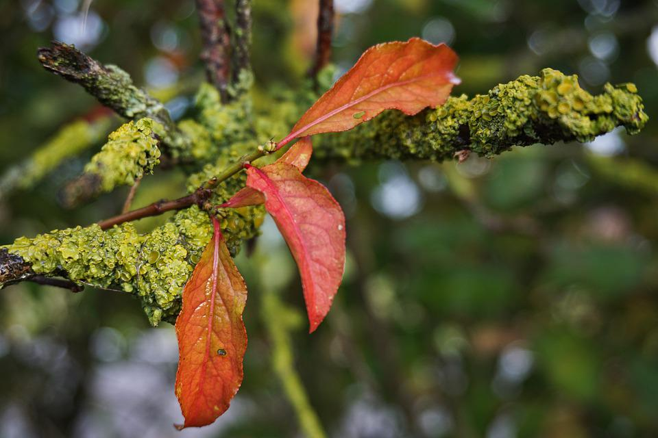 Autumn, Branch, Leaves, Nature, Tree, Fall Leaves