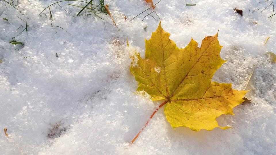 Fall, Autumn, Winter, Snow, Leaf, Fall Leaves, November