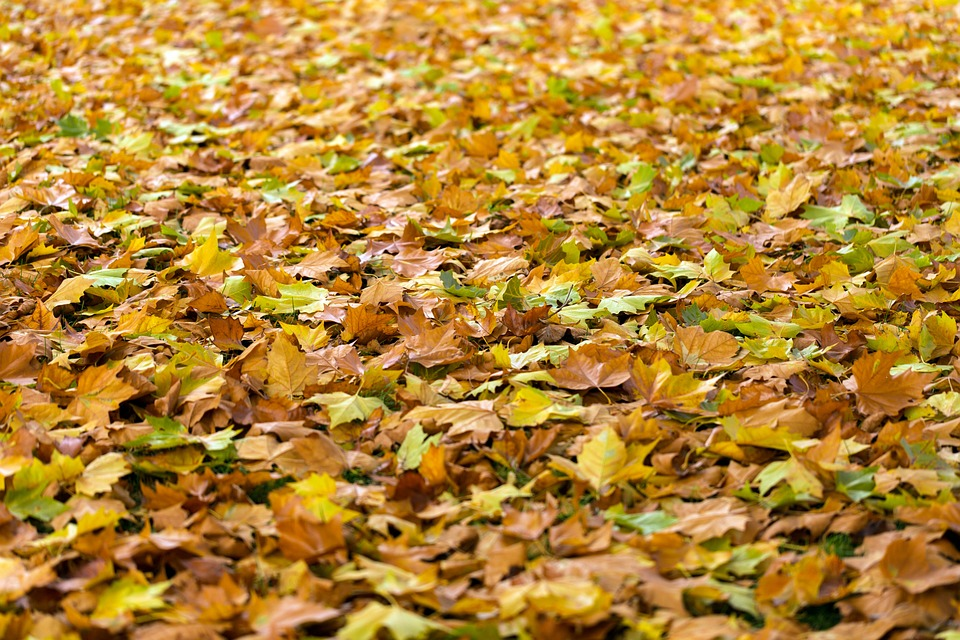 Autumn, Leaves, Fall, Background, Fall Leaves, Nature