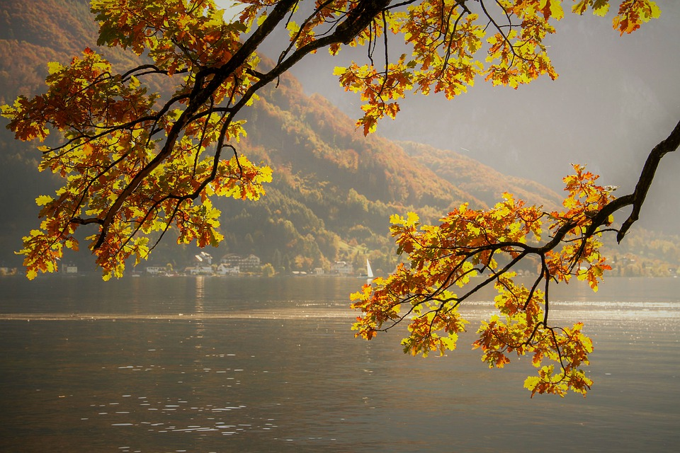 Autumn, Construction Pole, Fall Leaves, Yellow, Bright