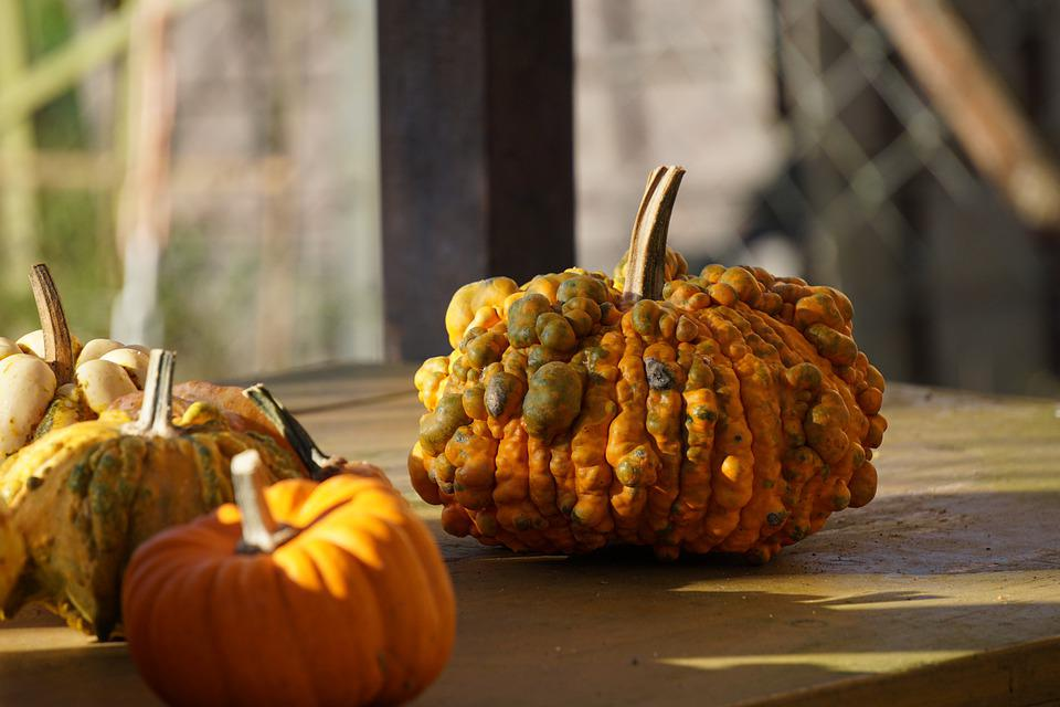 Fall, Pumpkins, Still Life, Nature, Harvest
