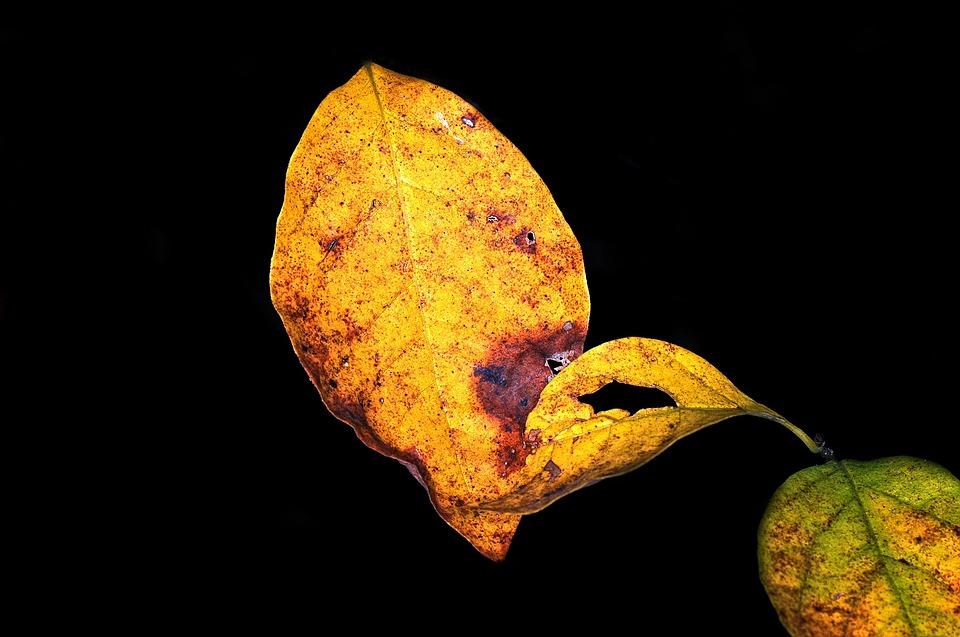 Fall, Leaves, Autumn, Orange, Yellow, Season, Nature