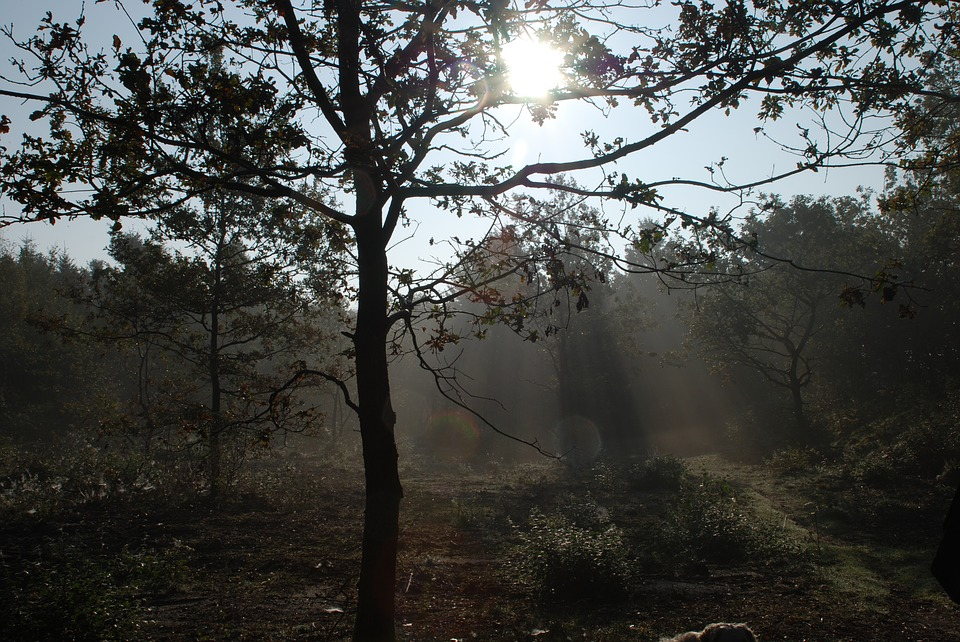 Tree, Wood, Fall, Sun, Day, Sun Rays, Forest, Nature