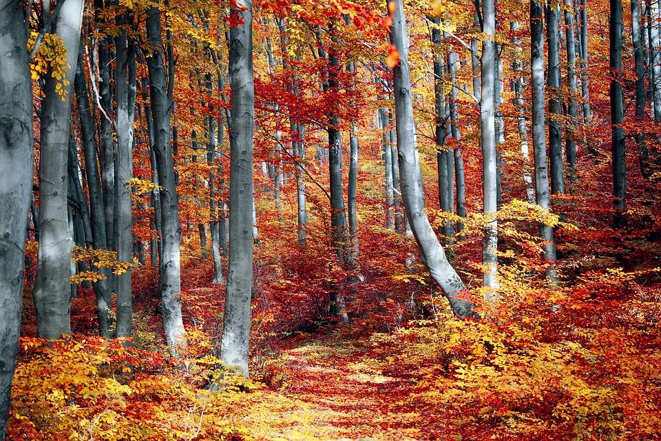 Fall, Leaf, Season, Wood, Tree, Nature, Landscape