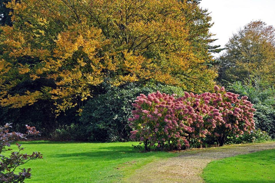 Fall, Garden, Park, Nature, Horticulture