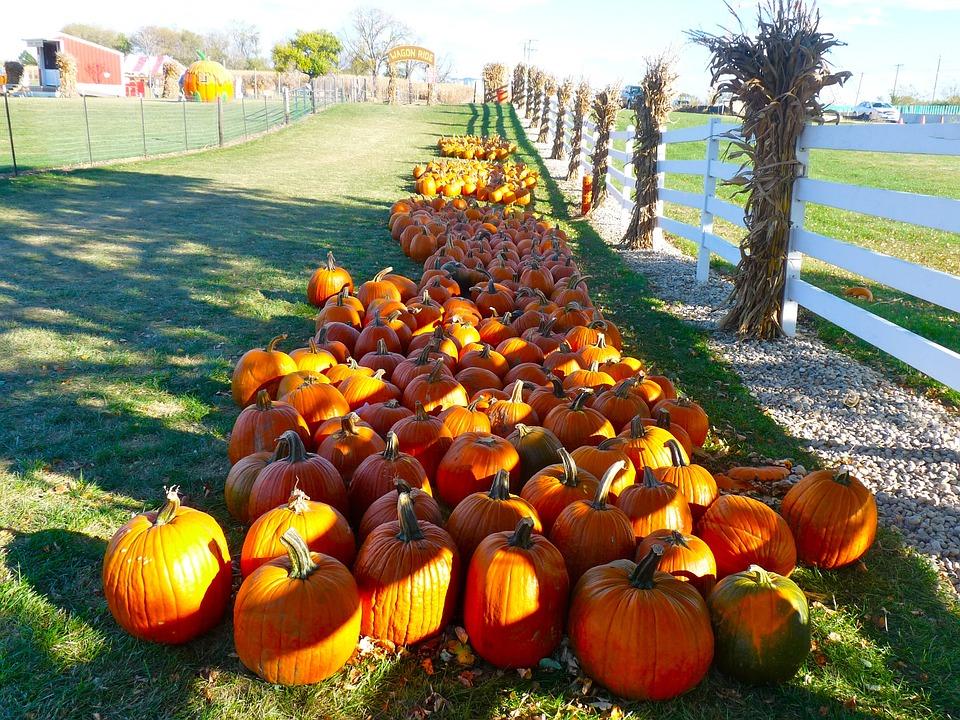 Pumpkins, Fall Festival, Autumn, Fall, Halloween