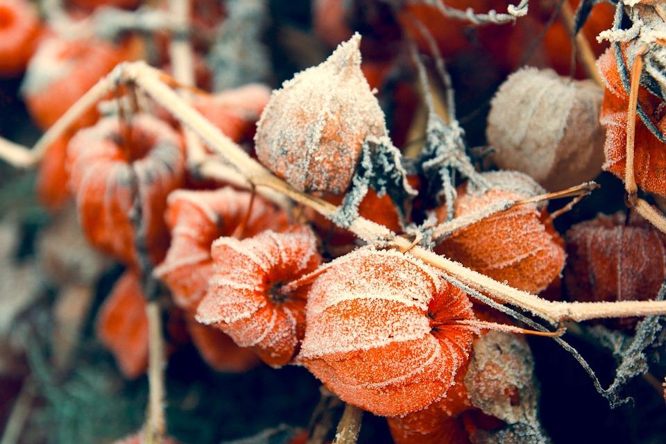 Nature, Fall, Season, Desktop, Decoration, Autumn