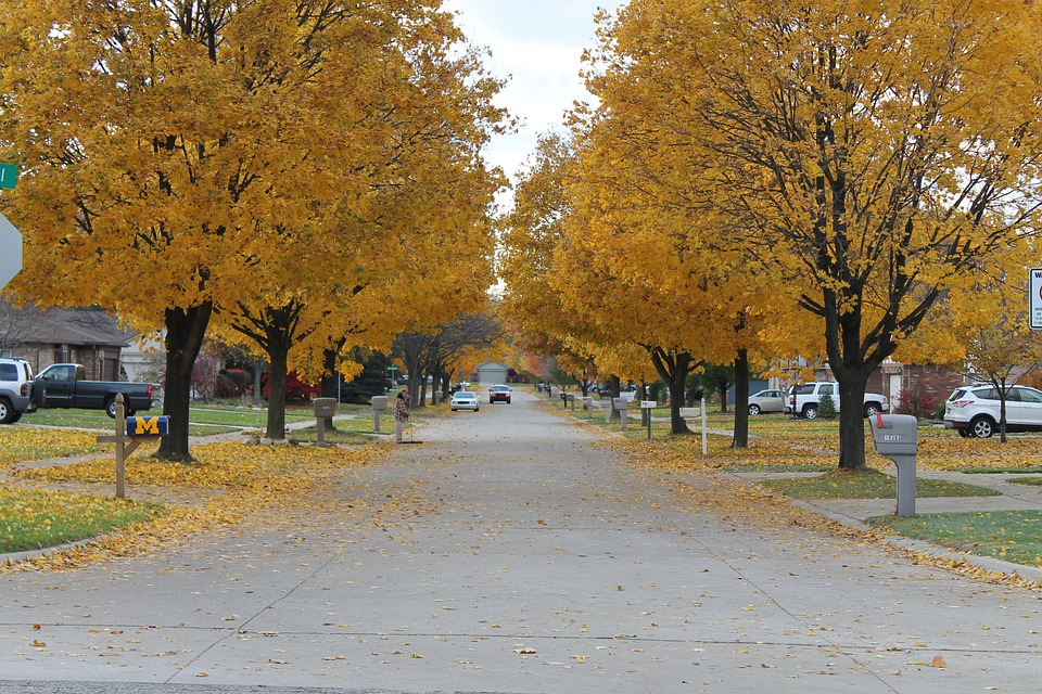 Fall, Leaves, Street, Tree, Fall Colors, Fall Leaves