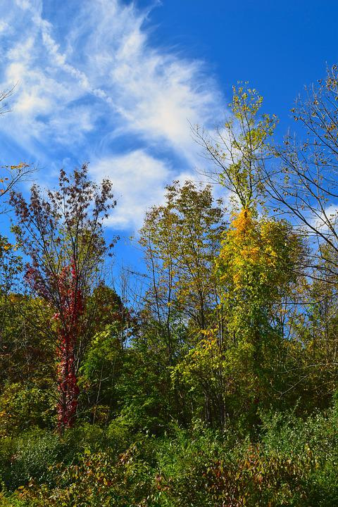 Trees, Sky, Fall, Colors, Cloud, Autumn, Foliage