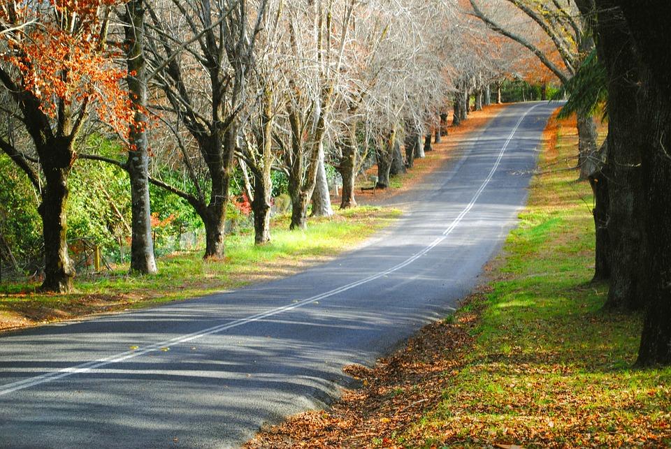 Road, Street, Autumn, Fall, Leaves, Trees, Colour