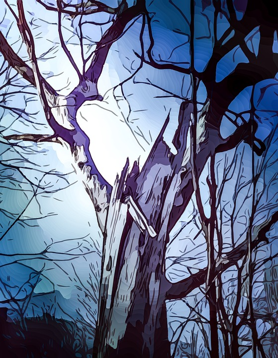 Tree, Branches, Sky, Perspective, Branch, Winter, Fall