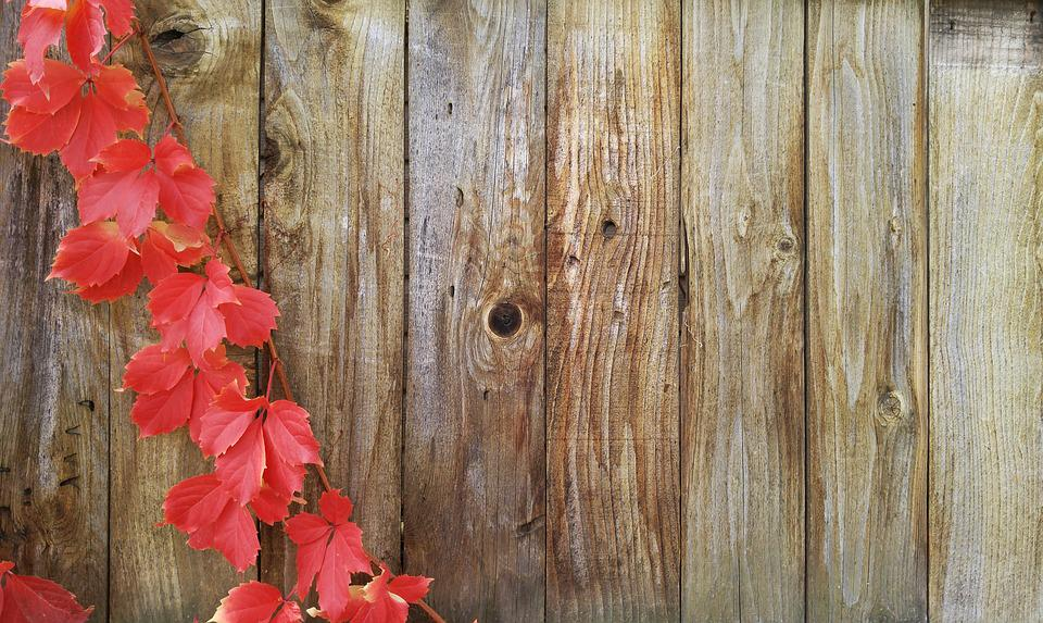 Vines, Autumn, Greeting Card, Fall, Wood Fence