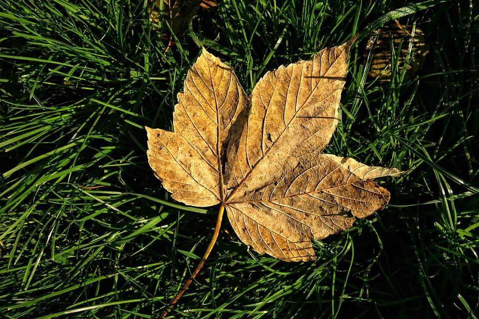 Autumn Leaf, Vein, Pattern, Fallen, Golden, Grass