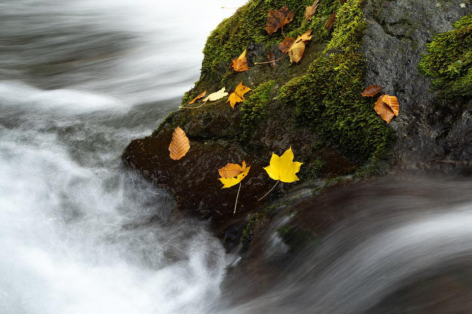 Landscape, Autumn, Torrent, Rock, Moss, Fallen Leaves