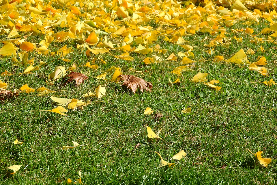Colorful Leaves, Fallen Leaves, Yellow Leaves