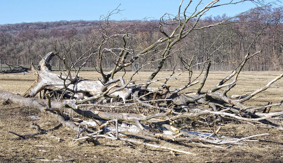 Deer, Tree, Overturned, Camouflage, Fallow Deer
